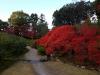Япония, Нара, парк