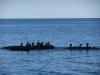 Восточный Крым. Черное море. Бакланы
