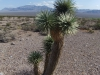 США, пустыня Nevada