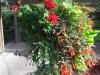 США, Белвью (Bellevue), гостиница Red Lion