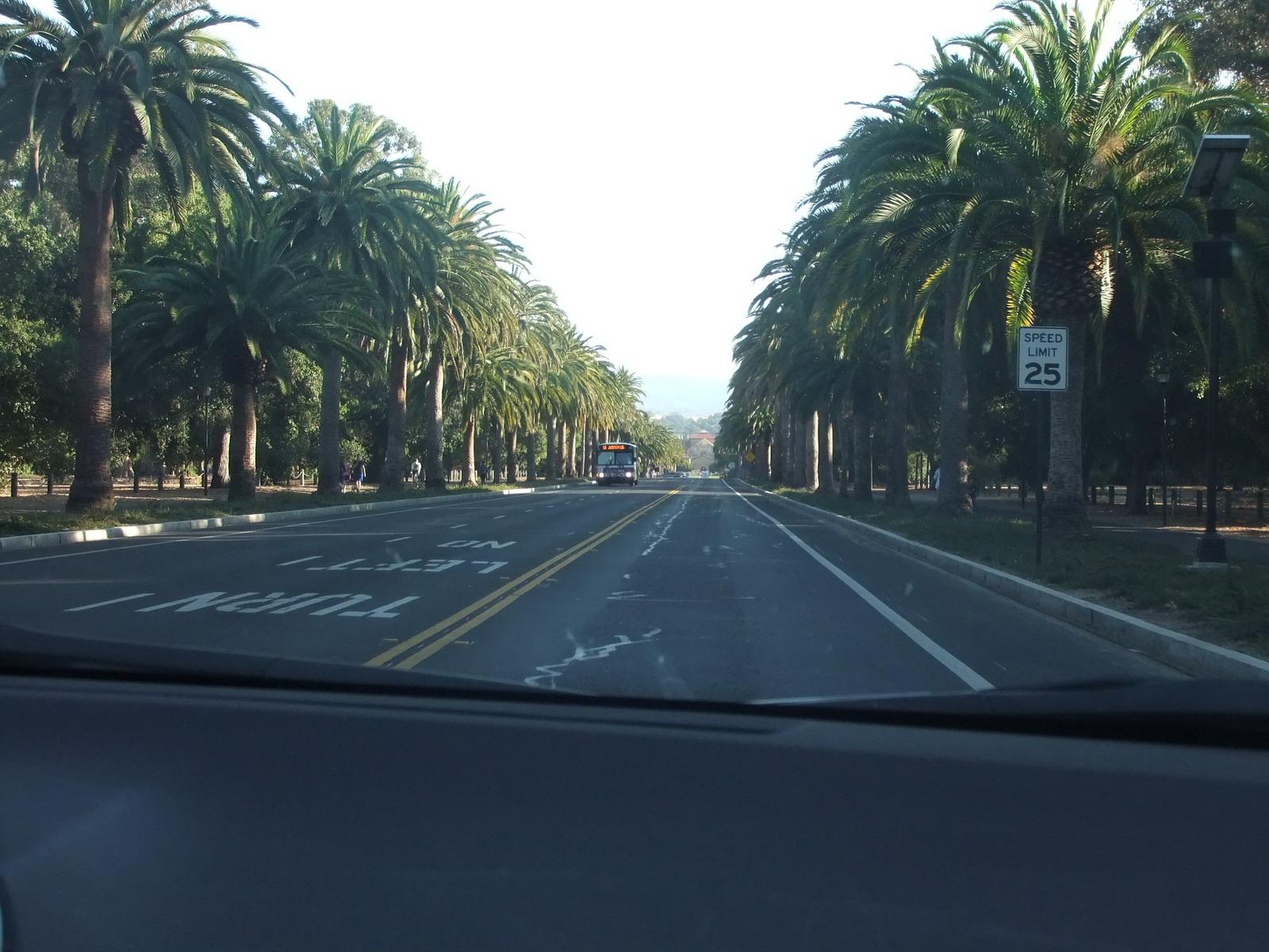 Пальмовая Аллея к Стенфордскому университету