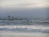 США, Калифорния, Тихий океан, пеликаны