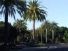 США, Калифорния, Пальмовая Аллея ведущая к Стенфордскому университету