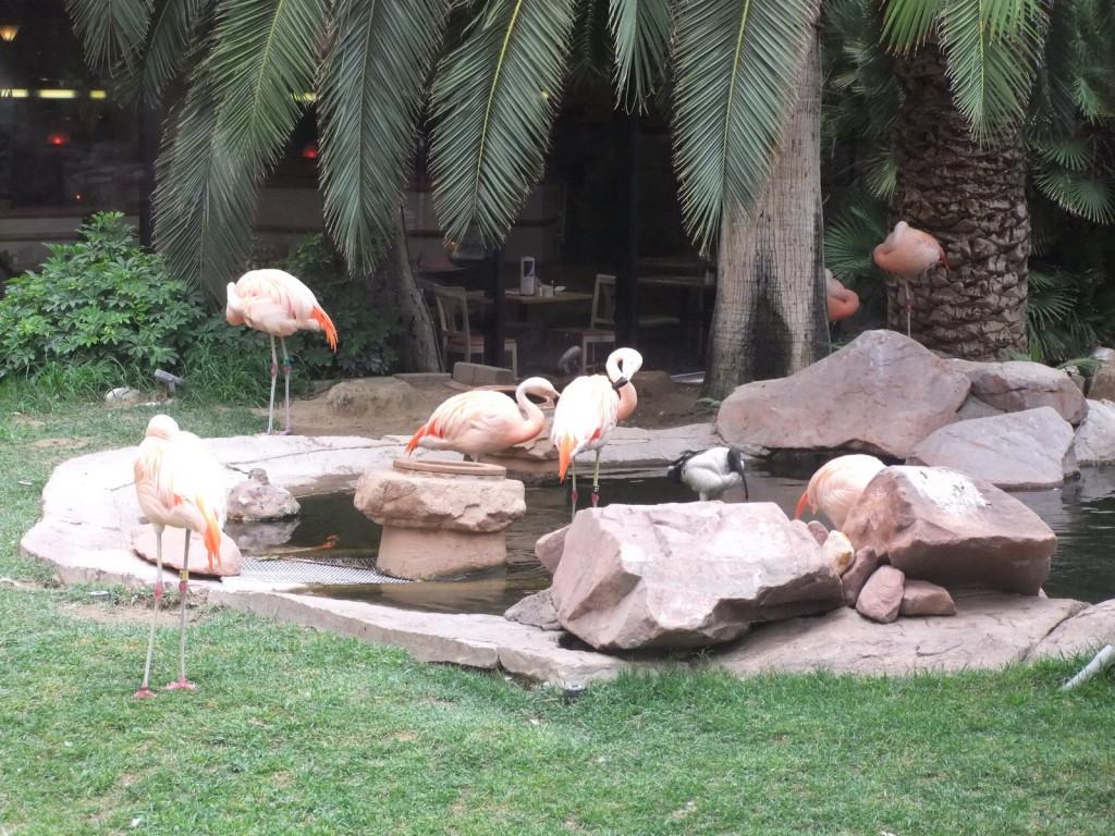 США, Las Vegas, гостиница Flamingo