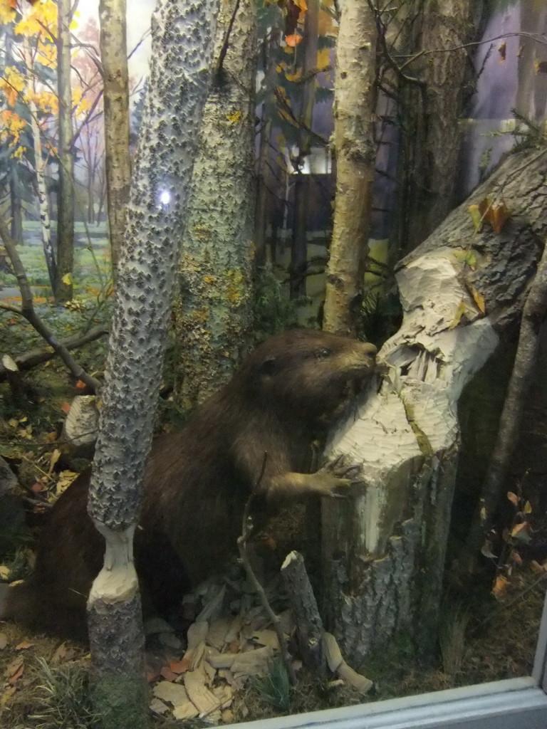 Ярославль, Спасо-Преображенский монастырь, музей природы